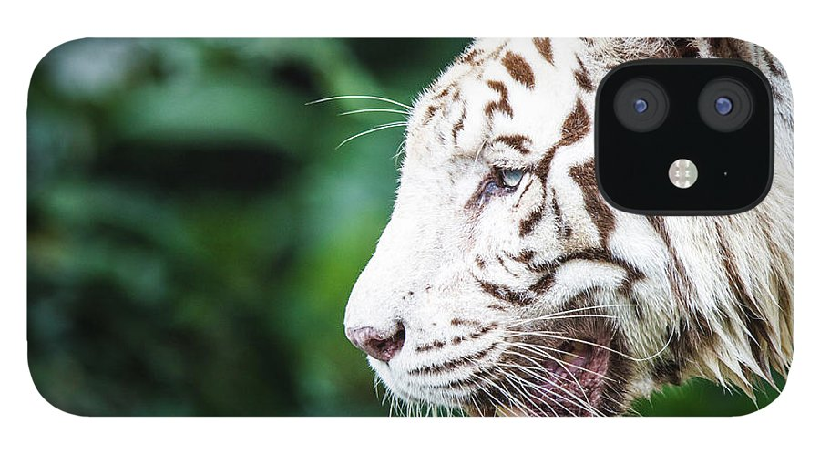 Snarling IPhone 12 Case featuring the photograph White Tiger by Tony Kh Lim