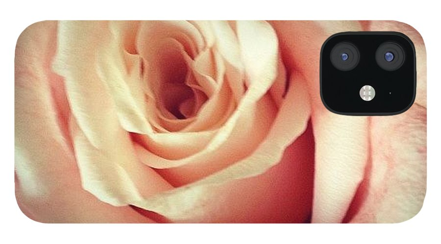 Beautiful IPhone 12 Case featuring the photograph #whiterose #rose #flower #bloom #pretty by Amber Campanaro