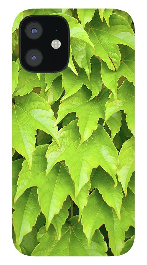Outdoors IPhone 12 Case featuring the photograph Wild Vine Parthenocissus Tricuspidata by Neyya