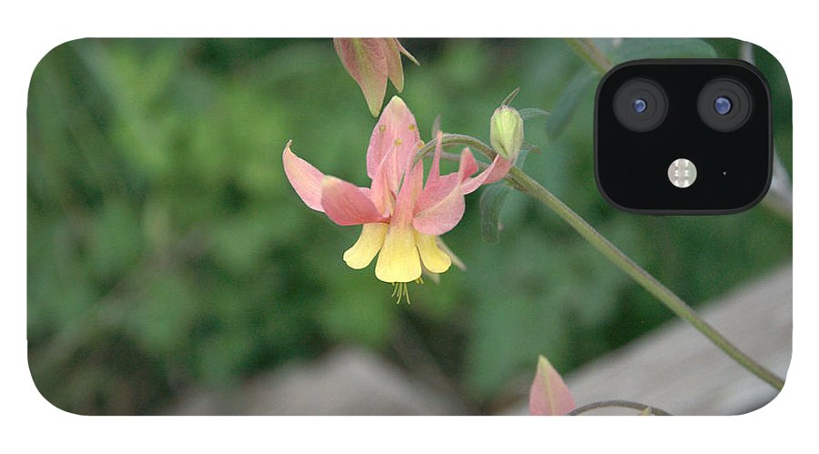 Yellow IPhone 12 Case featuring the photograph Yellow Columbine 2 by Frank Madia