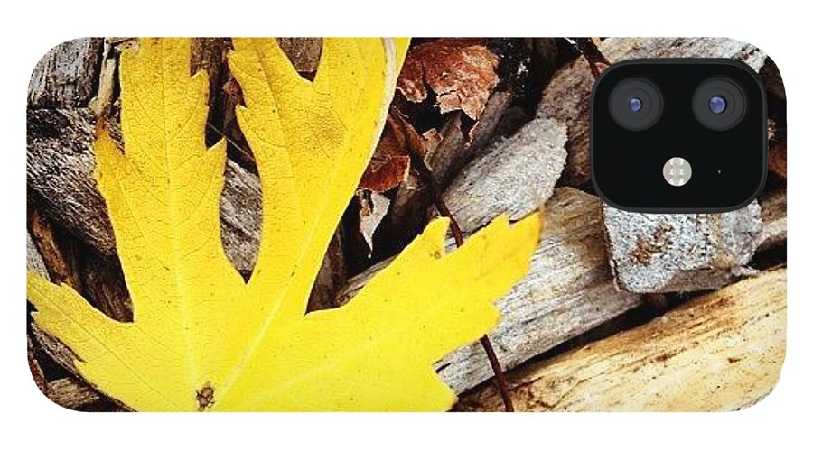 Leaf IPhone 12 Case featuring the photograph Yellow Leaf by Christy Beckwith