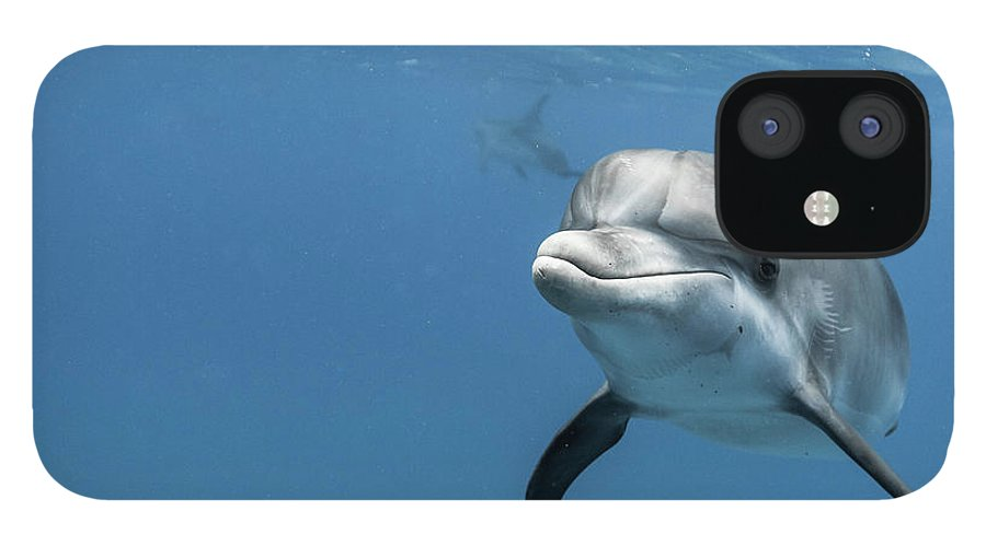 Underwater IPhone 12 Case featuring the photograph Young Atlantic Spotted Dolpin by Kerstin Meyer