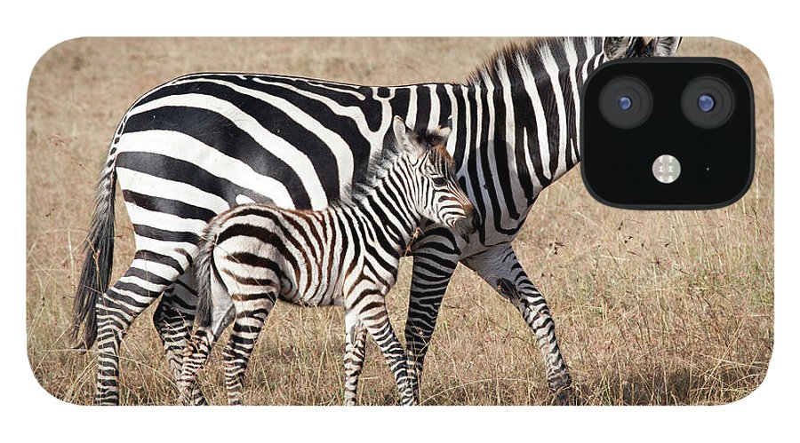 Kenya IPhone 12 Case featuring the photograph Zebra With Young Foal, Masai Mara by Angelika