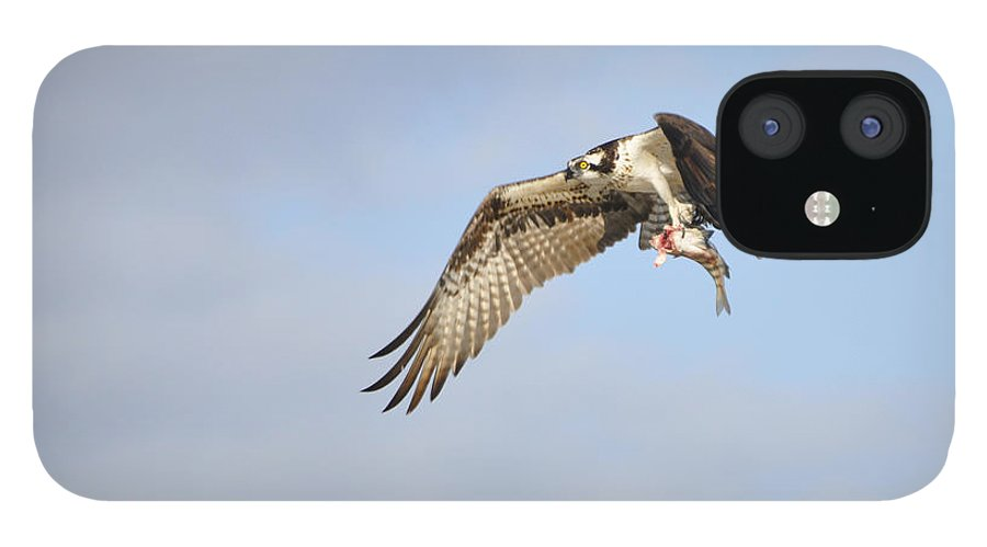 Osprey iPhone 12 Case featuring the photograph Osprey Lunch To Go I by Christine Stonebridge