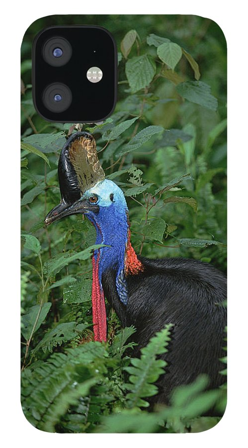 Mp IPhone 12 Case featuring the photograph Southern Cassowary Casuarius Casuarius by Konrad Wothe