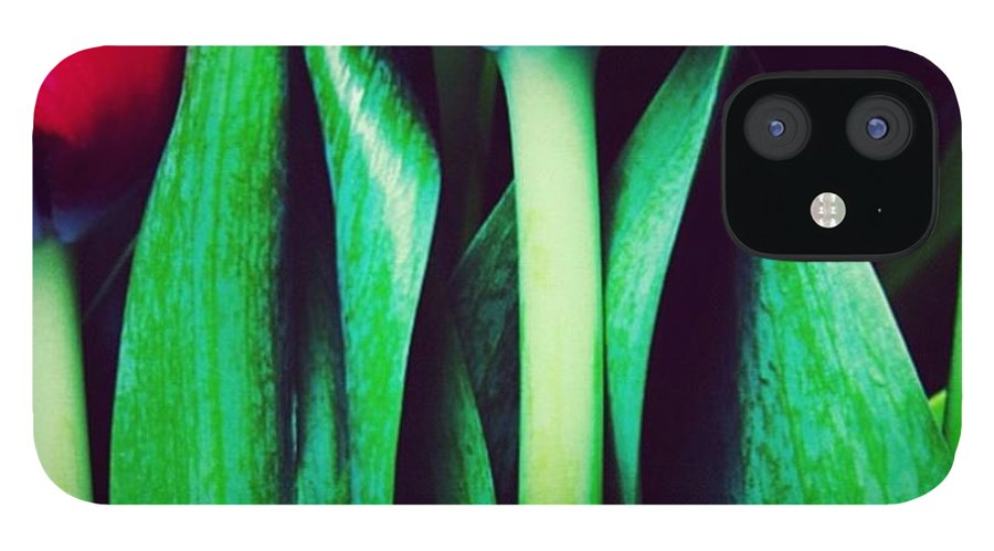 Tulips IPhone 12 Case featuring the photograph Instagram Photo by Ritchie Garrod