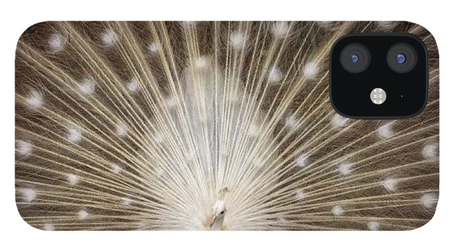 IPhone 12 Case featuring the photograph A Rare White Peacock In Full Display by Larry Marshall