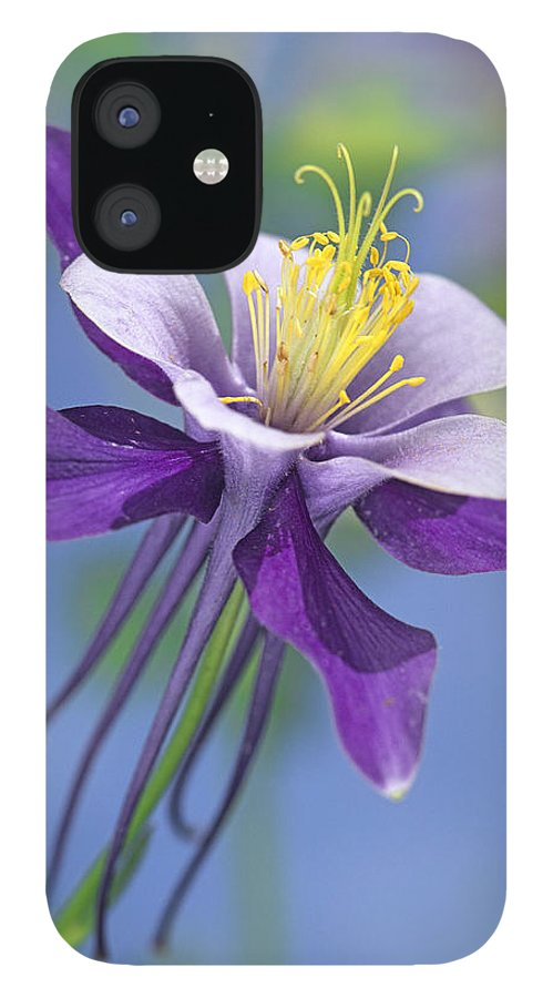 00176669 IPhone 12 Case featuring the photograph Colorado Blue Columbine Close by Tim Fitzharris