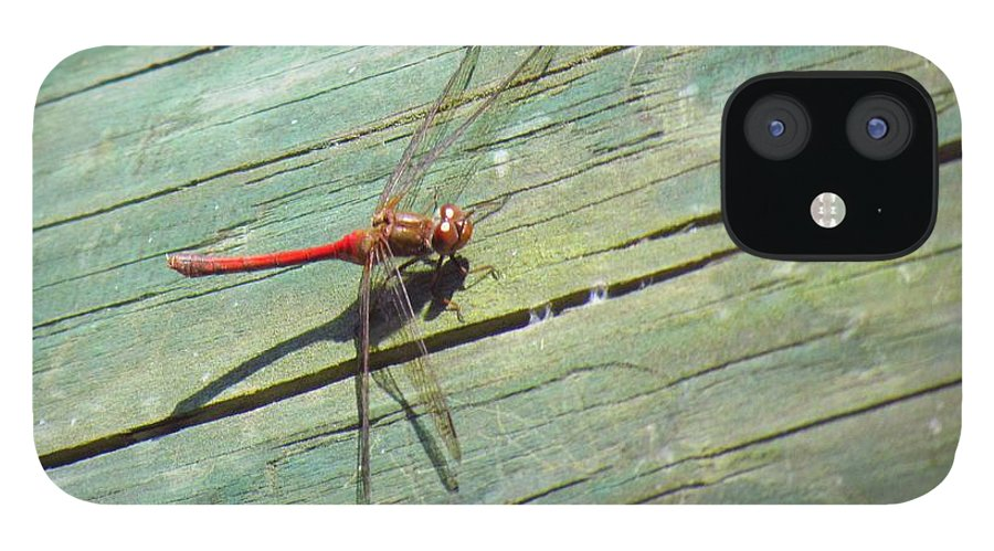 Damselfly IPhone 12 Case featuring the photograph Damselfly ready for liftoff by Rrrose Pix