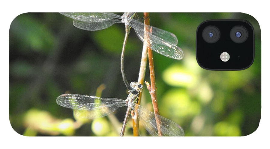 Dragonflies IPhone 12 Case featuring the photograph Dragonflies by Paulina Roybal