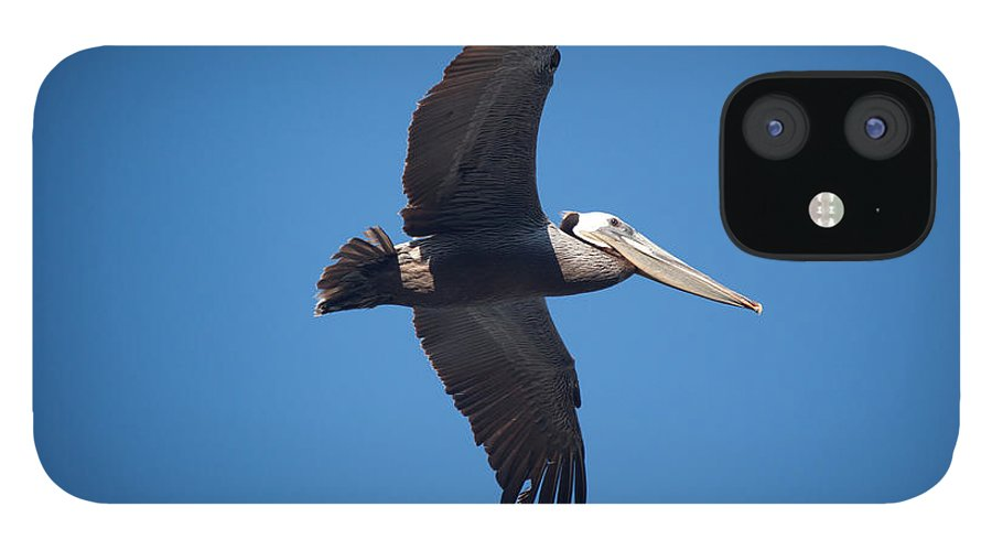 Pelican IPhone 12 Case featuring the photograph flying Pelican by Ralf Kaiser