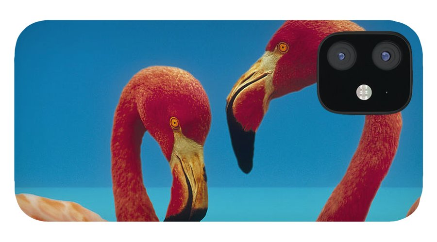 00172310 IPhone 12 Case featuring the photograph Greater Flamingo Courting Pair by Tim Fitzharris