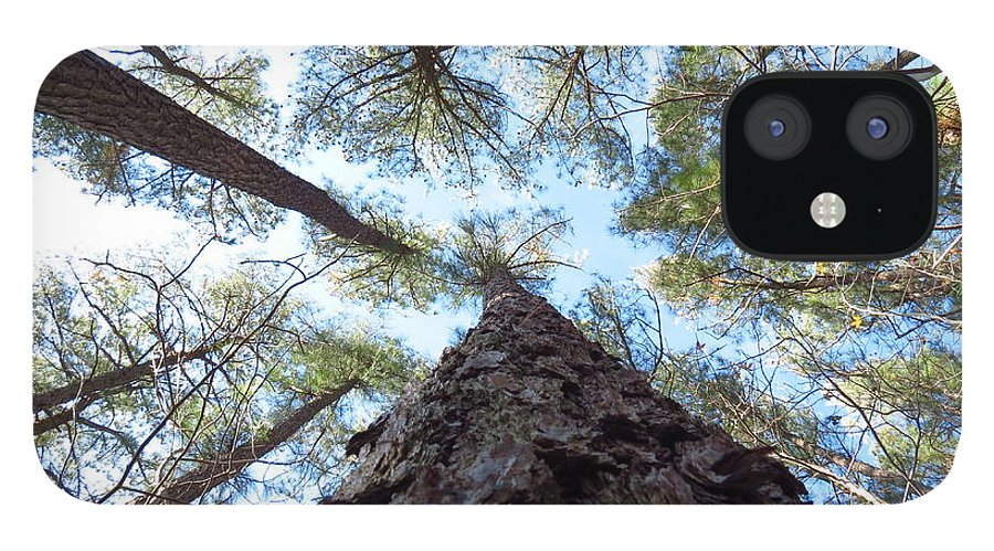 Trees IPhone 12 Case featuring the photograph Looking up by Rrrose Pix