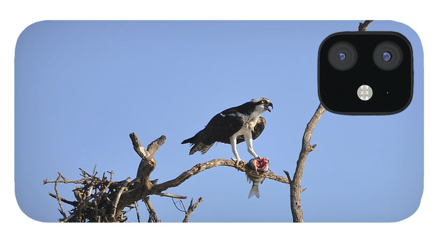 Osprey IPhone 12 Case featuring the photograph Osprey with Catch I by Christine Stonebridge