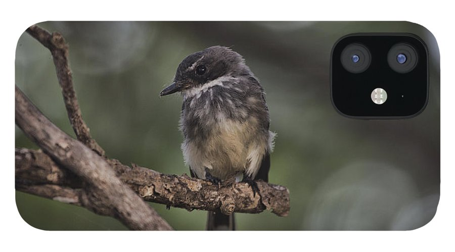 Robin IPhone 12 Case featuring the photograph Robin Top-End Australia by Douglas Barnard