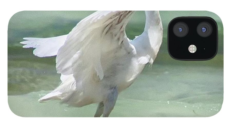 Egret IPhone 12 Case featuring the photograph A Snowy Egret (egretta Thula) At Mahoe by John Edwards