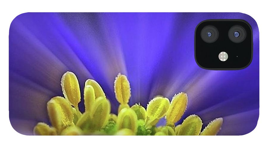 Beautiful IPhone 12 Case featuring the photograph blue Shades - An Anemone Blanda by John Edwards