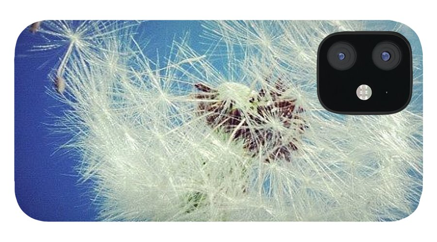 Dandelion IPhone 12 Case featuring the photograph Dandelion and blue sky by Matthias Hauser