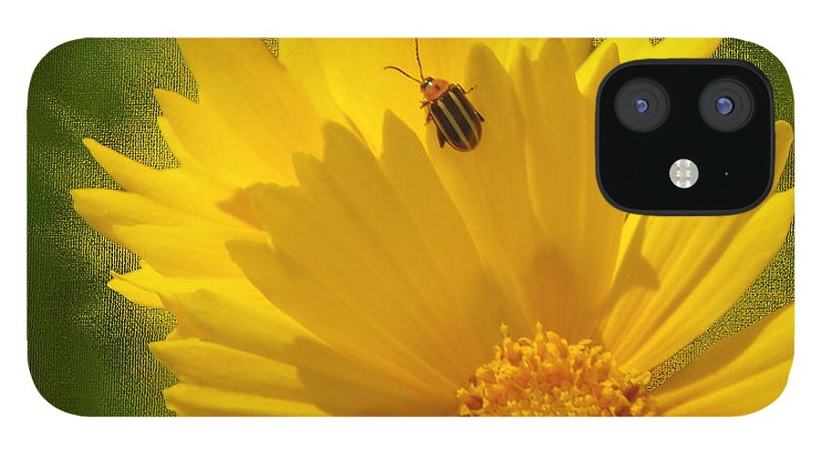 Floral IPhone 12 Case featuring the photograph Lady Bug Lookout by Paul Anderson