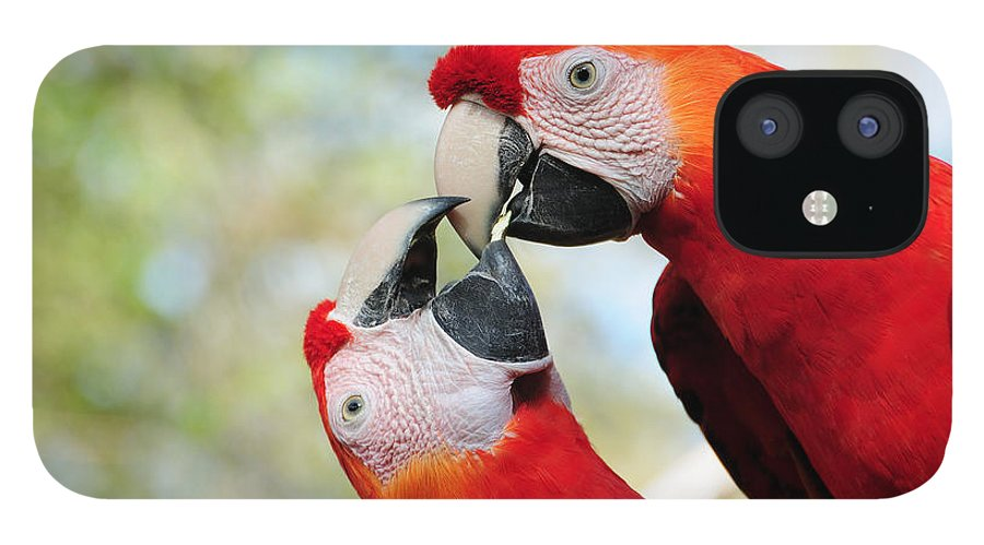 Bird IPhone 12 Case featuring the photograph Macaws by Steven Sparks