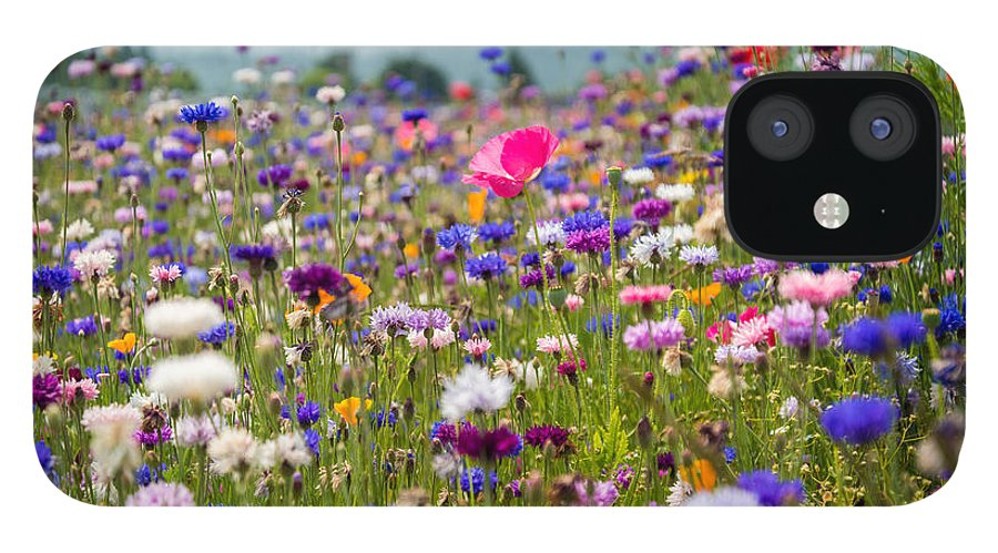 Wildflowers IPhone 12 Case featuring the photograph Wild Flowers by Kristopher Schoenleber