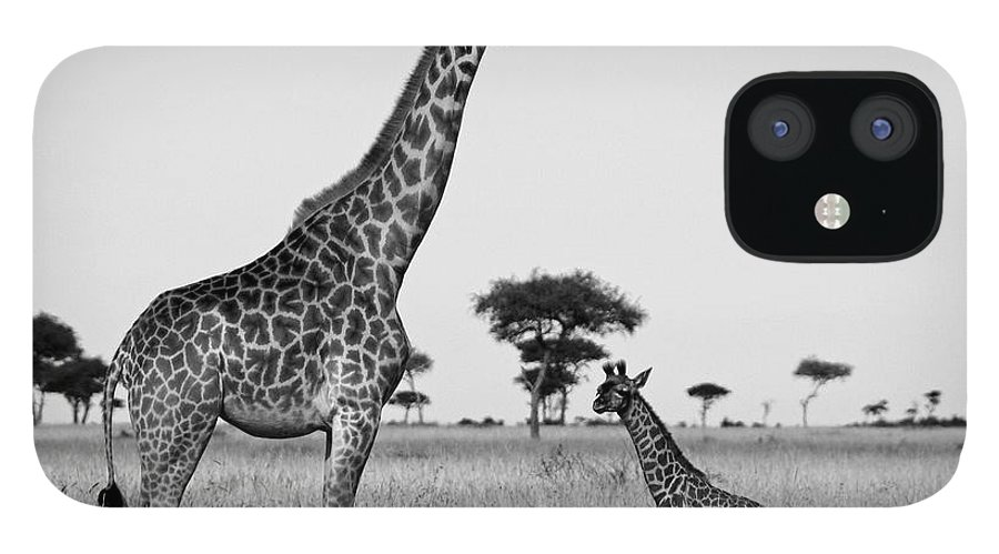 Africa IPhone 12 Case featuring the photograph Meet My Little One by Michele Burgess