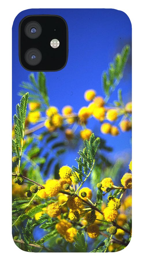 Tree Blooms IPhone 12 Case featuring the photograph 3rd Dimension by Randy Oberg
