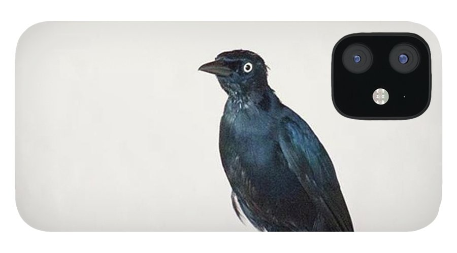 Caribgrackle iPhone 12 Case featuring the photograph A Carib Grackle (quiscalus Lugubris) On by John Edwards
