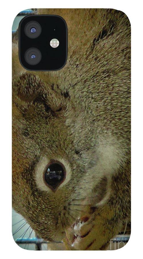 Red Squirrel IPhone 12 Case featuring the photograph A Cute Thief by Randy J Heath