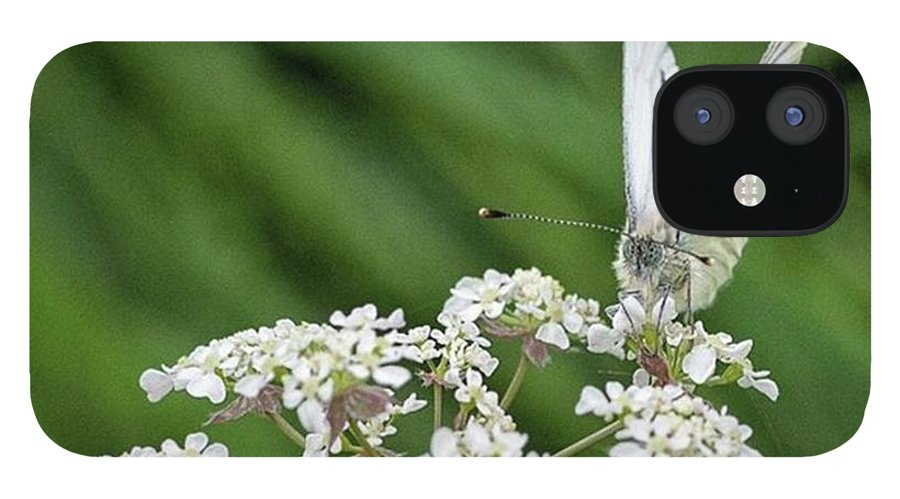 Insectsofinstagram IPhone 12 Case featuring the photograph A Green-veined White (pieris Napi) by John Edwards