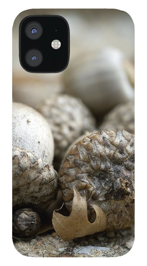 Acorns IPhone 12 Case featuring the photograph Acorns by Jessica Wakefield
