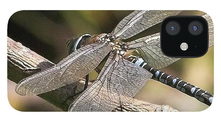 Dragonfly IPhone 12 Case featuring the photograph Aeshna Juncea - Common Hawker taken At by John Edwards