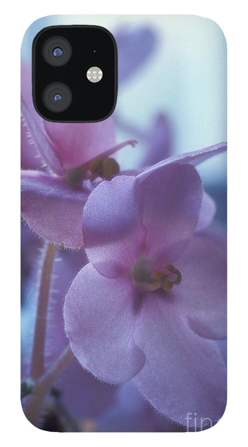 African IPhone 12 Case featuring the photograph African Violets in the Window by Keith Gondron