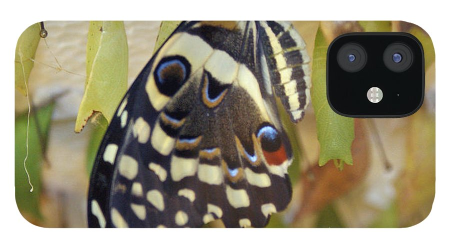 Butterfly IPhone 12 Case featuring the photograph And life begins by Shelley Jones