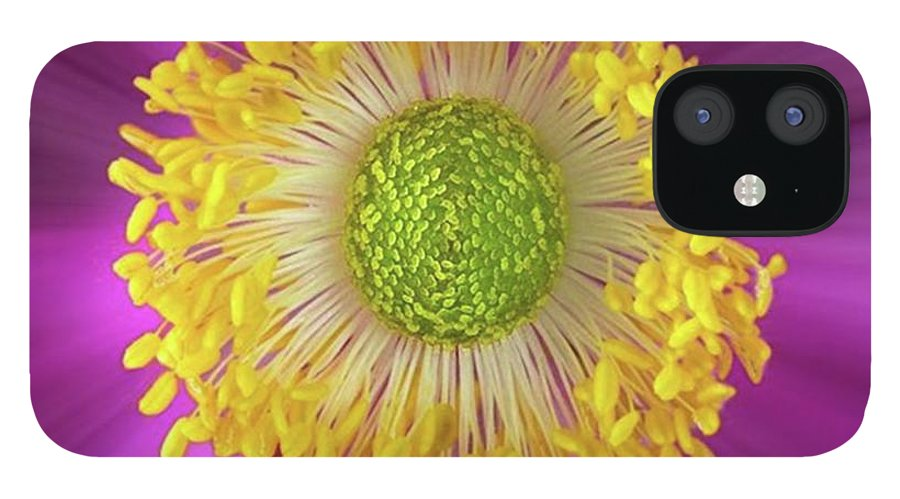 Beautiful IPhone 12 Case featuring the photograph Anemone Hupehensis 'hadspen by John Edwards