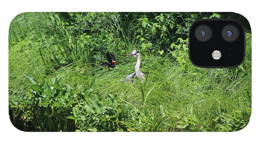 Marsh IPhone 12 Case featuring the photograph Annoyed - Heron and Red Winged Blackbird 5 of 10 by Colleen Cornelius