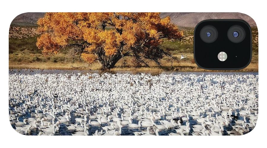 Nature IPhone 12 Case featuring the photograph Annual Snow Geese Meet-up, Bosque Del Apache, New Mexico by Zayne Diamond Photographic