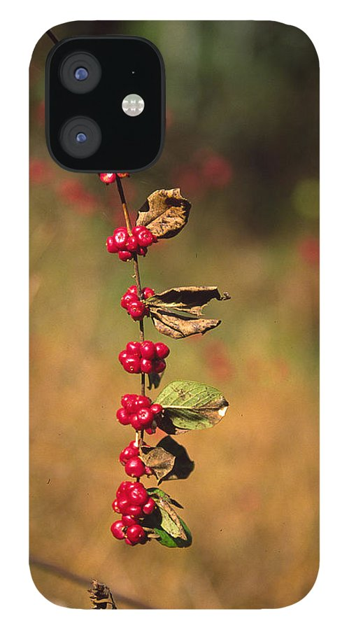 Fall Colors IPhone 12 Case featuring the photograph Another Year by Randy Oberg