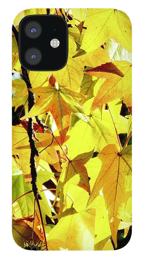 Liquidambar IPhone 12 Case featuring the photograph Backlit Liquidambar Leaves by Kirsten Giving