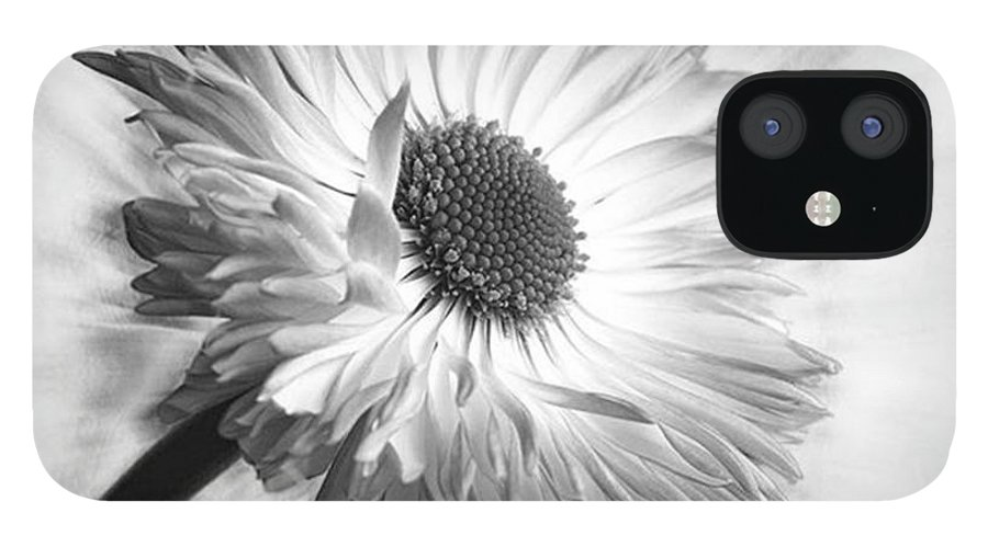 Beautiful IPhone 12 Case featuring the photograph Bellis In Mono  #flower #flowers by John Edwards