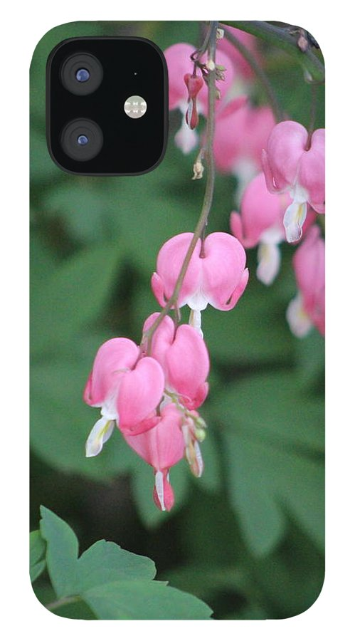 Flamingo Pink IPhone 12 Case featuring the photograph Bleeding Hearts in Prism Pink Against Forest Green by Colleen Cornelius