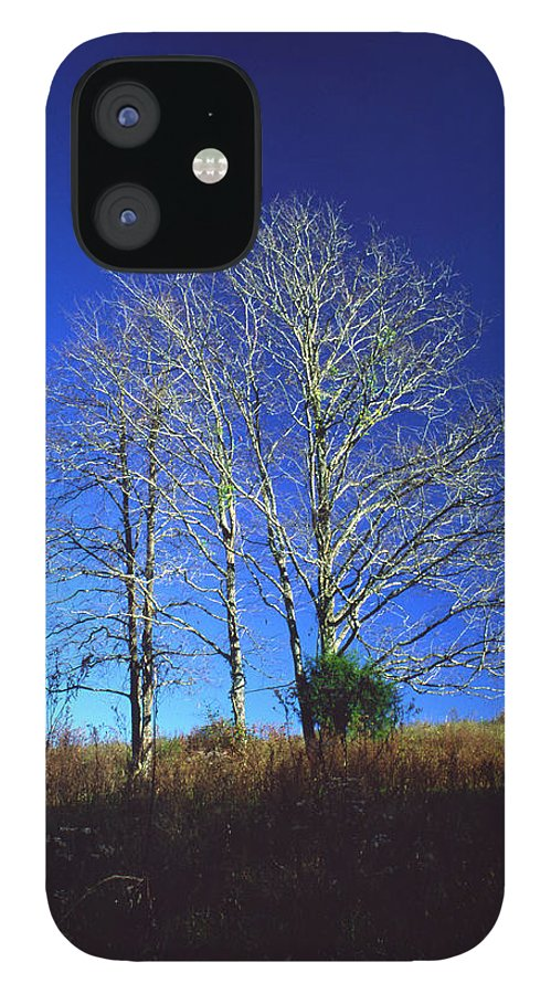Landscape IPhone 12 Case featuring the photograph Blue Tree in Tennessee by Randy Oberg