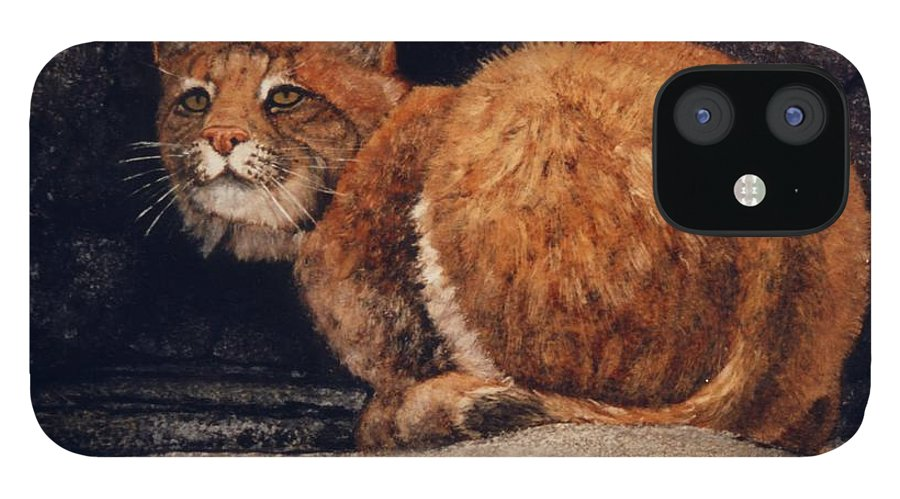 Wildlife IPhone 12 Case featuring the painting Bobcat On Ledge by Frank Wilson