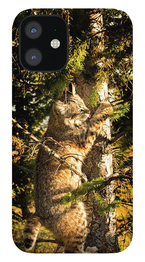 Bobcat IPhone 12 Case featuring the photograph Bobcat up a tree by Roy Nierdieck
