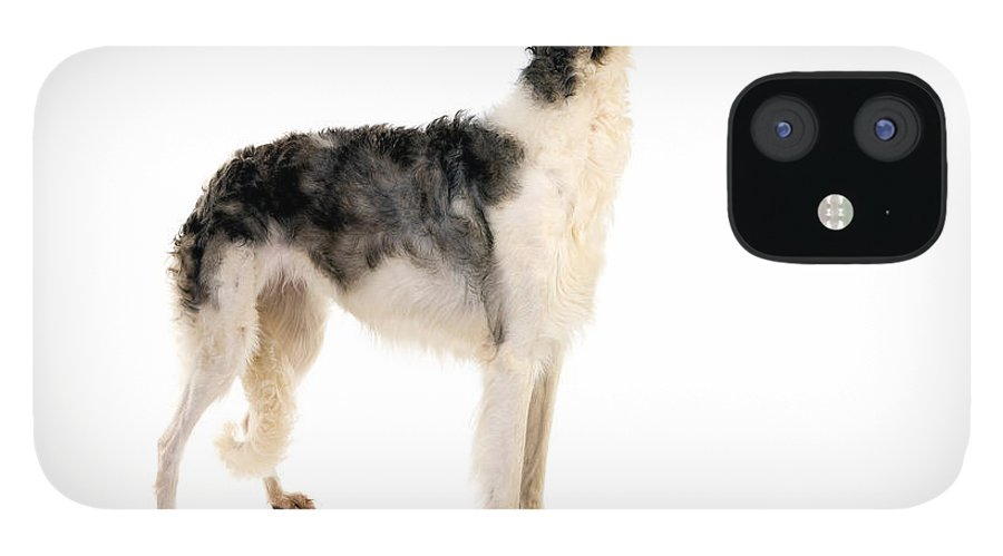 Adult IPhone 12 Case featuring the photograph Borzoi Or Russian Wolfhound by Gerard Lacz