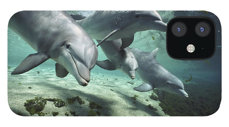 00082400 iPhone 12 Case featuring the photograph Four Bottlenose Dolphins Hawaii by Flip Nicklin