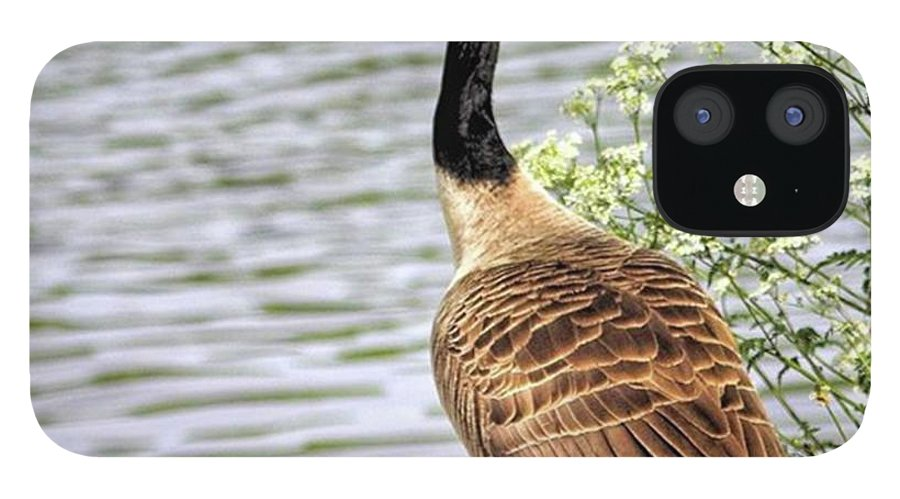 Geese iPhone 12 Case featuring the photograph Branta Canadensis  #canadagoose by John Edwards