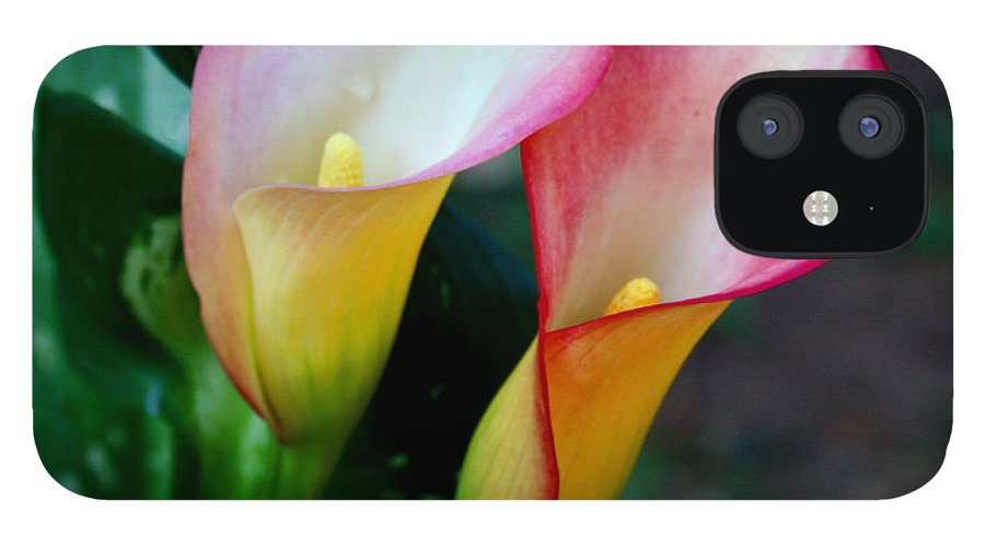 Calla Lily IPhone 12 Case featuring the photograph Calla Lily Twins by Paul Anderson