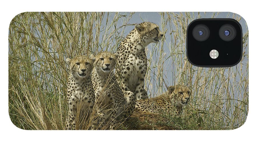 Africa IPhone 12 Case featuring the photograph Cheetah Family by Michele Burgess