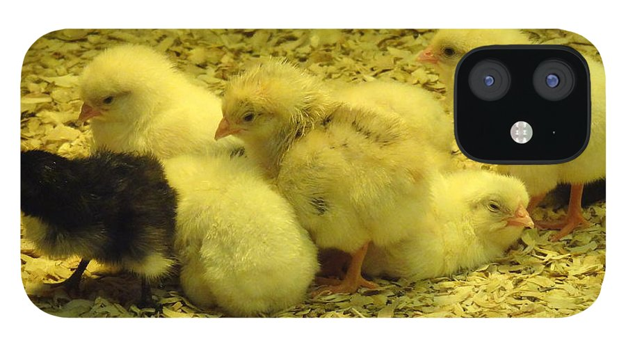 Baby iPhone 12 Case featuring the photograph Chicks by Laurel Best